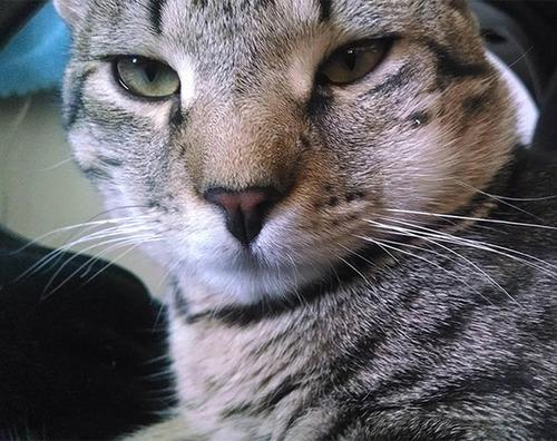 蜂に刺された猫が可愛いそうだけど可愛いwwwwの画像(20枚目)