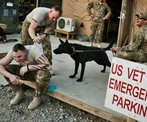 戦地での軍用犬の日常がわかるちょっと癒される画像の数々!!の画像(47枚目)