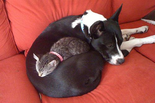 ほのぼのする!仲の良い犬と猫の画像の数々!!の画像(13枚目)