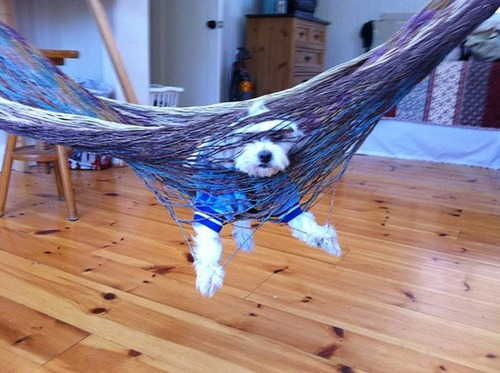 犬はバカ可愛い!!バカだけど憎めない可愛い犬の画像の数々!!の画像(9枚目)