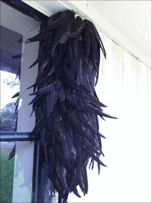 超過密!密集状態の鳥の画像がもふもふで癒されるwwの画像(18枚目)