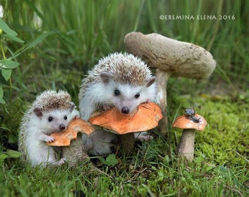 secret_world_of_hedgehogs_11