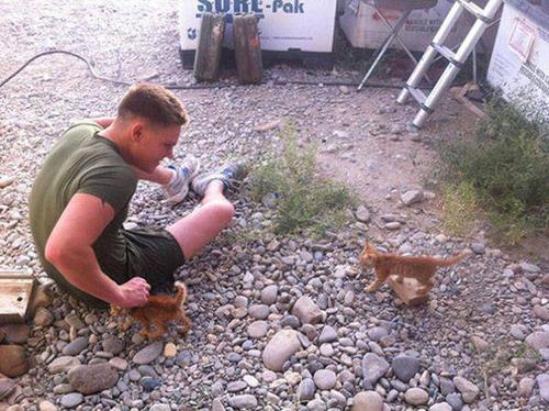 戦場にもネコは居る!!極限状態でも癒される戦場のネコの画像の数々!!の画像(3枚目)