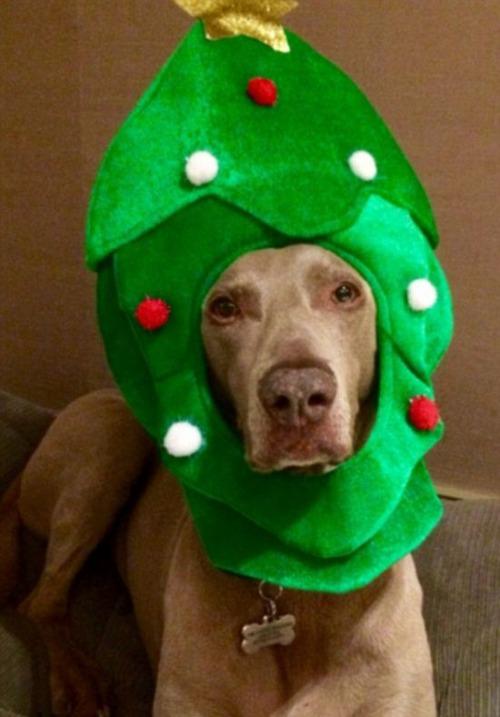 犬とクリスマスの画像(3枚目)