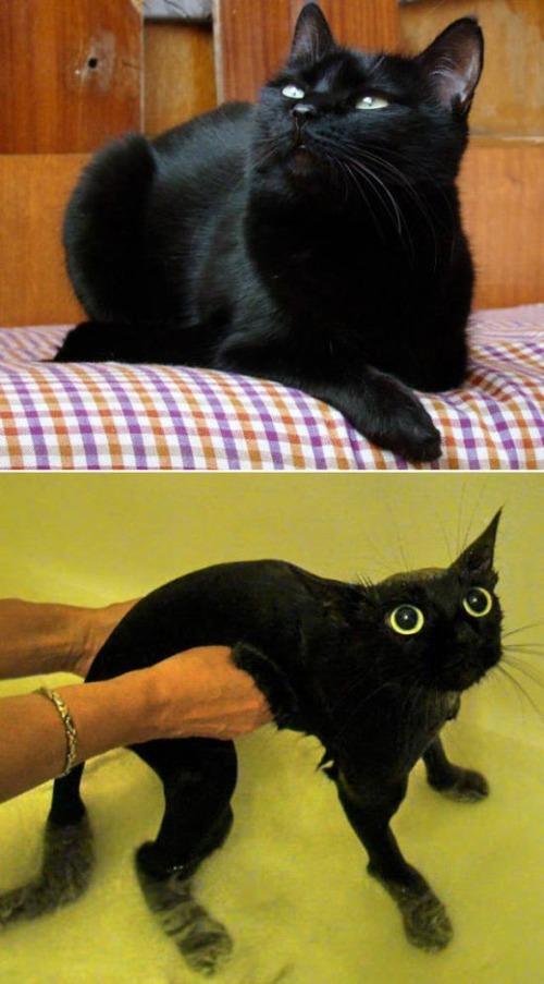 猫ちゃんの濡れる前後の比較の画像(12枚目)