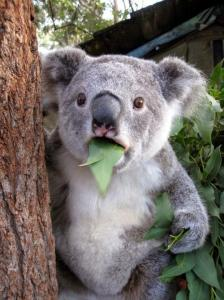 動物達が驚いている瞬間の表情をとらえた写真が凄い!の画像(27枚目)