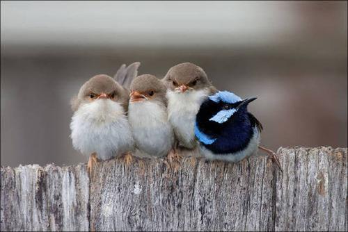 超過密!密集状態の鳥の画像がもふもふで癒されるwwの画像(13枚目)