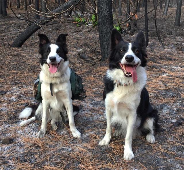 森林に種を撒くのが仕事の犬の画像(1枚目)