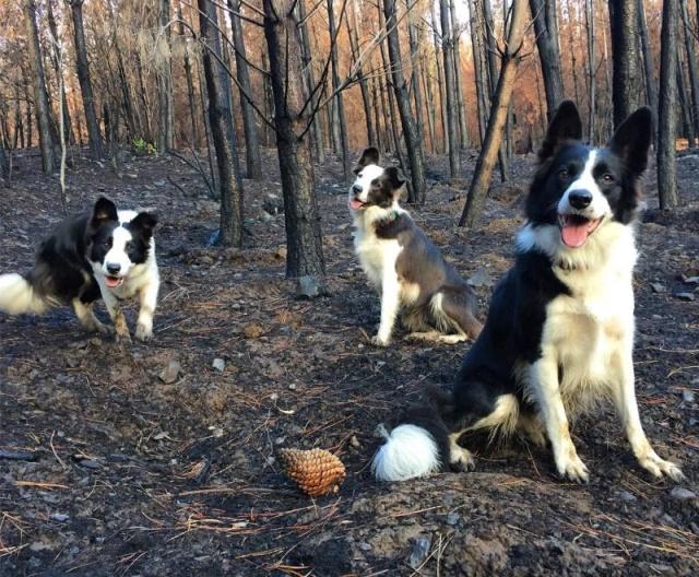 森林に種を撒くのが仕事の犬の画像(2枚目)