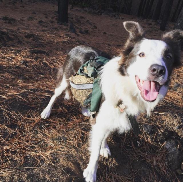 森林に種を撒くのが仕事の犬の画像(3枚目)