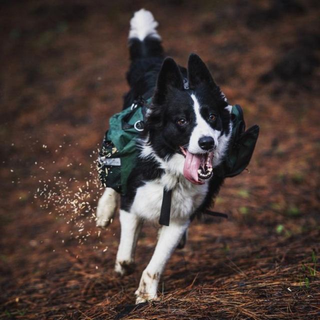 森林に種を撒くのが仕事の犬の画像(4枚目)