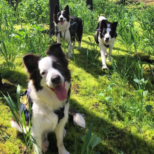 森林に種を撒くのが仕事の犬の画像(5枚目)