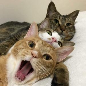 猫の顔のジェットストリームアタック02