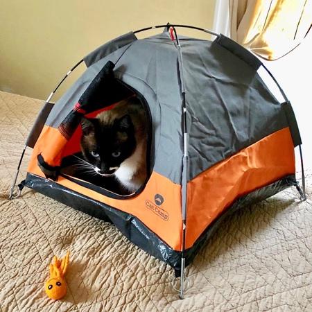ネコ専用テントの画像(1枚目)