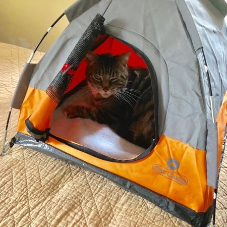 ネコ専用テントの画像(2枚目)