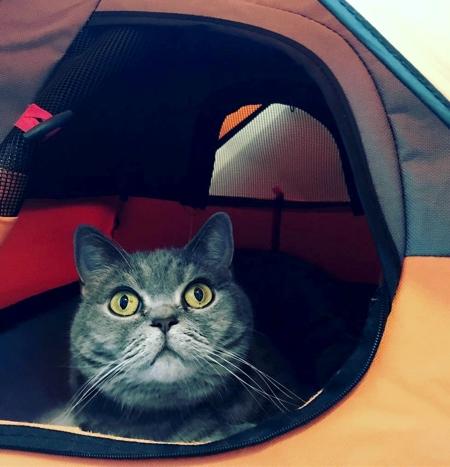 ネコ専用テントの画像(4枚目)