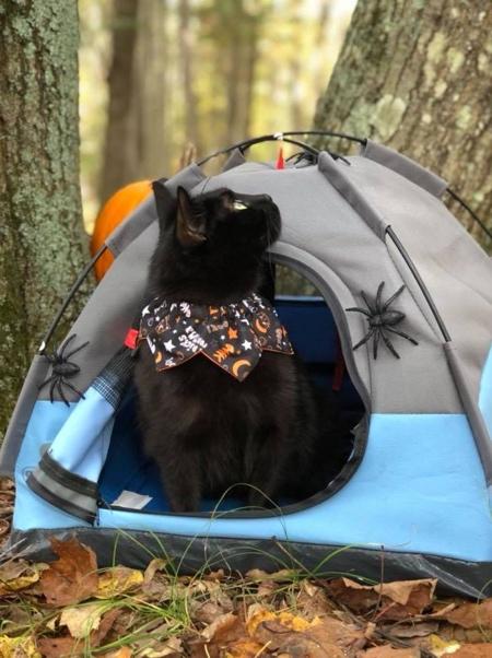 ネコ専用テントの画像(5枚目)
