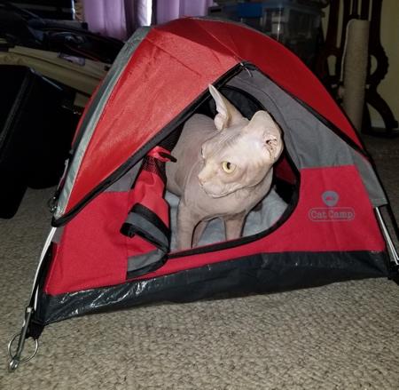 ネコ専用テントの画像(6枚目)
