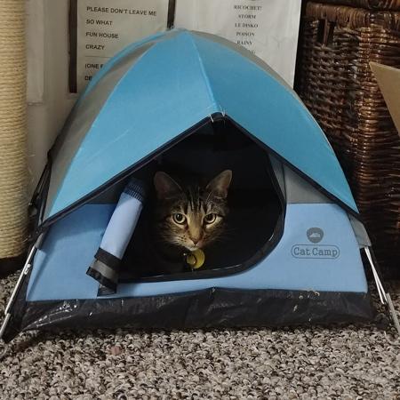 ネコ専用テントの画像(7枚目)