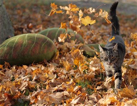 葉っぱのような猫の家の画像(4枚目)
