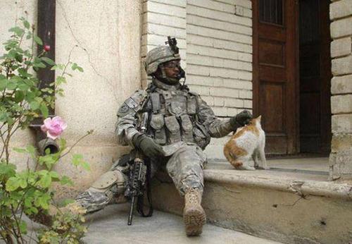 戦場にもネコは居る!!極限状態でも癒される戦場のネコの画像の数々!!の画像(13枚目)