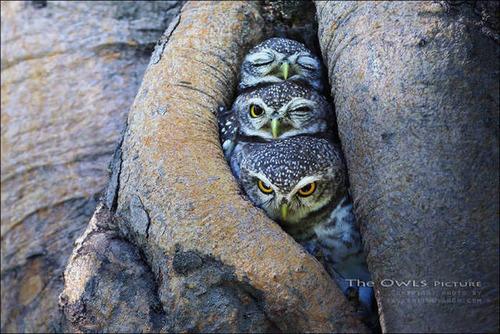 超過密!密集状態の鳥の画像がもふもふで癒されるwwの画像(22枚目)