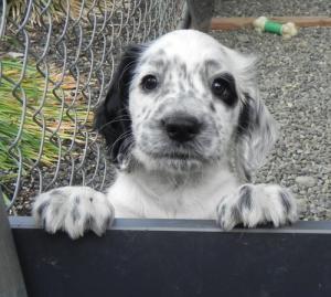 かわい過ぎる子犬の画像の数々!の画像(83枚目)