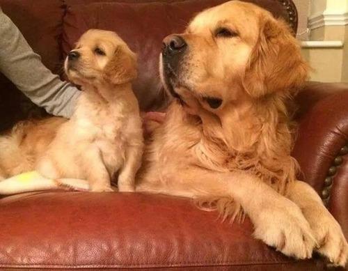 かわい過ぎる子犬の画像の数々!の画像(42枚目)