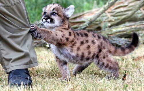 ほのぼのするけどちょっと怖い!幸せそうな動物たちの写真の数々!の画像(20枚目)