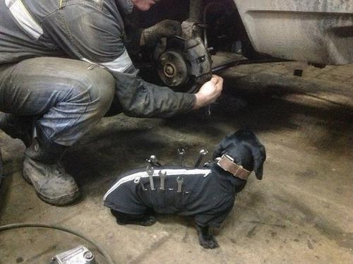 自動車整備を助けるワンコがとても助かる!!の画像(3枚目)