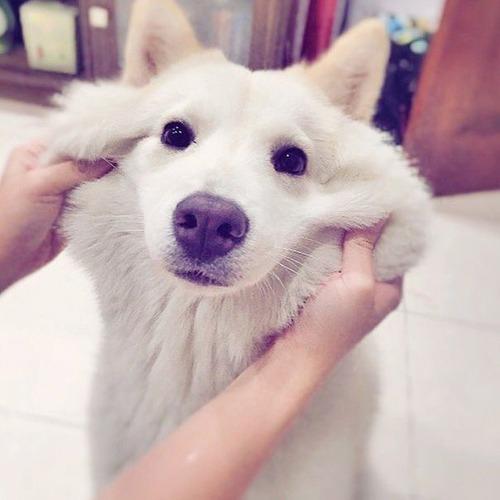 可愛い?可愛くない?ちょっと特徴的な雑種の犬の画像の数々!!の画像(27枚目)