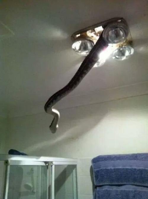 オーストラリアのヘビ事情の画像(1枚目)