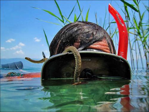 【画像】自然を撮影するカメラマンに興味津々の動物達!!の画像(1枚目)