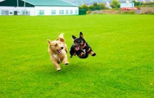 ずっと友達!仲がいい犬たちの画像が癒される!!の画像(22枚目)