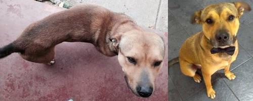 捨犬の時と良い飼主が見つかった時のワンちゃんのほのぼの比較画像の数々!!の画像(25枚目)