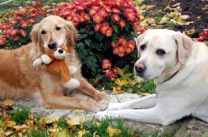 ずっと友達!仲がいい犬たちの画像が癒される!!の画像(29枚目)
