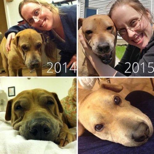 捨犬の時と良い飼主が見つかった時のワンちゃんのほのぼの比較画像の数々!!の画像(1枚目)