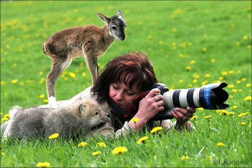 【画像】自然を撮影するカメラマンに興味津々の動物達!!の画像(16枚目)