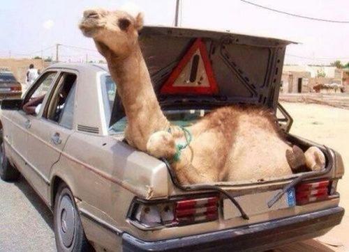 運搬している自動車の画像(27枚目)