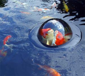 【画像】水面から魚が飛び出して見える「Fish Window」が凄い!!の画像(3枚目)