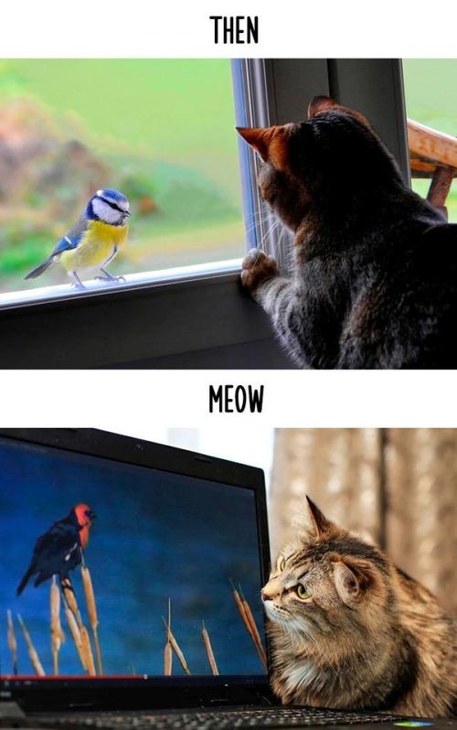 テクノロジーの進化がネコ達に与えた影響の比較画像の数々!!の画像(6枚目)