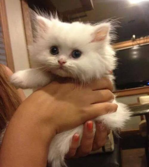 kittens_23