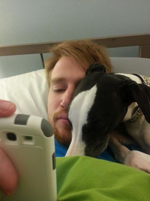 犬は可愛いけど、かなりジャマな感じの犬の画像の数々!!の画像(2枚目)