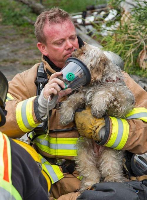 【画像】動物達も本気で助ける!ちょっと癒されるレスキュー隊の仕事の様子!!の画像(23枚目)