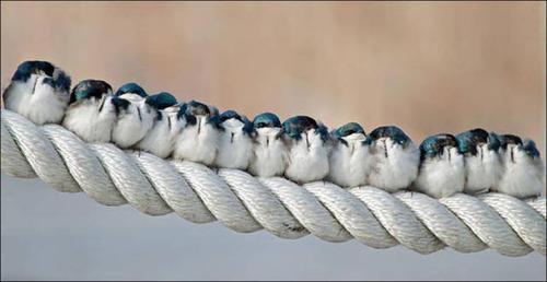 超過密!密集状態の鳥の画像がもふもふで癒されるwwの画像(9枚目)