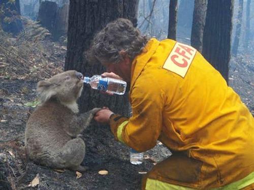 【画像】動物達も本気で助ける!ちょっと癒されるレスキュー隊の仕事の様子!!の画像(19枚目)