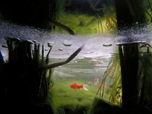 美しく神秘的な水辺の画像(11枚目)