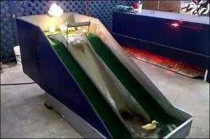 子供のアヒル用の滑り台の画像_000007968