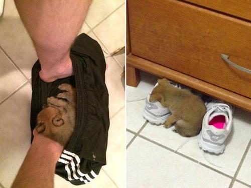 どこでも寝れる!?どこでも寝てる可愛い犬の画像の数々!!の画像(25枚目)
