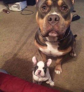 ずっと友達!仲がいい犬たちの画像が癒される!!の画像(1枚目)